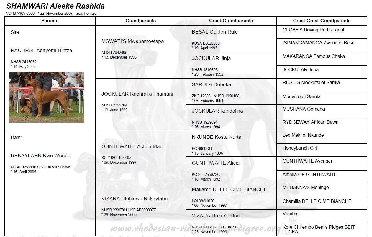 Rashida-pedigree